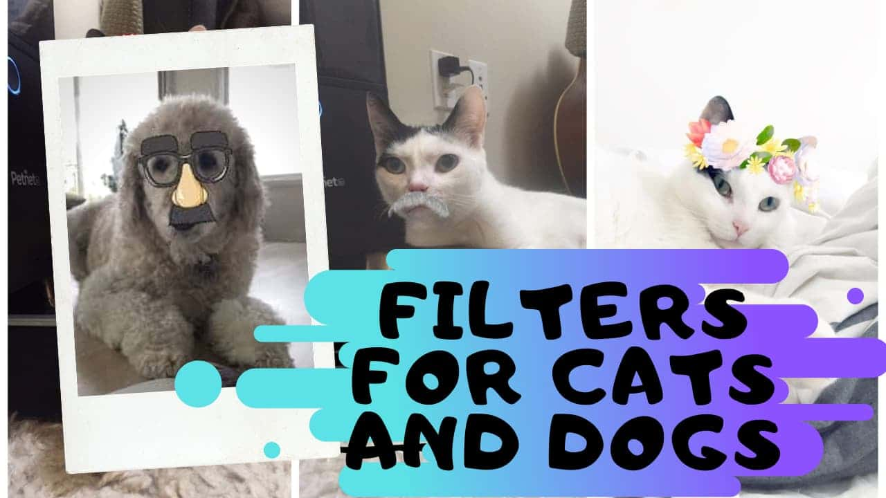Snapchat filters for cats and Dogs