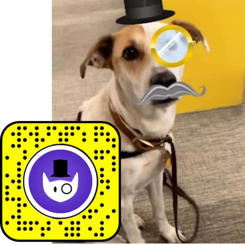 Snapchat Filters for Cats Fancy Pet
