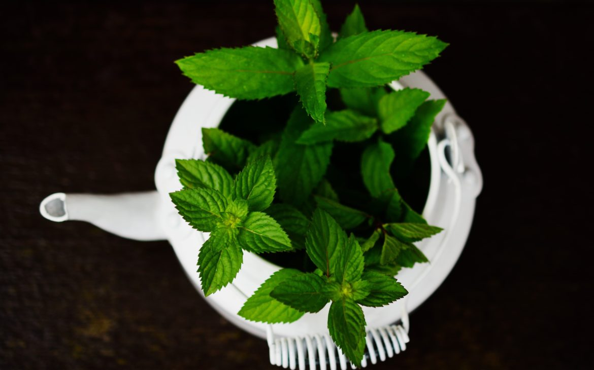 peppermint indoor plants that repel spiders