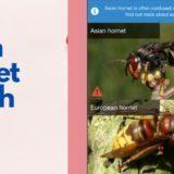 Asian Hornet Watch App