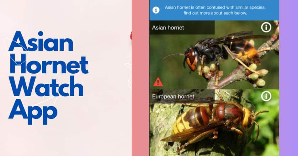 Asian Hornet Watch App
