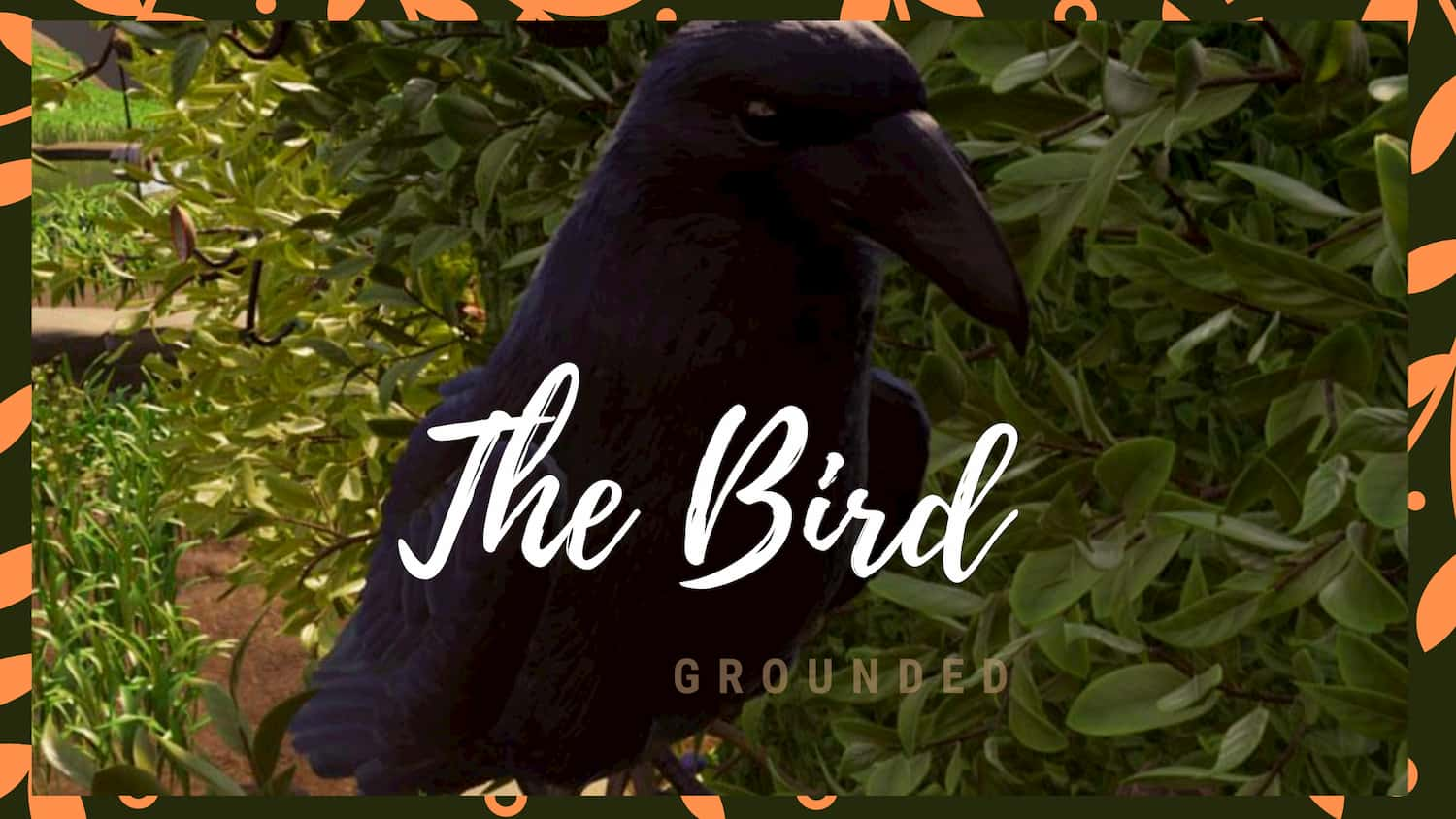 grounded bird locations