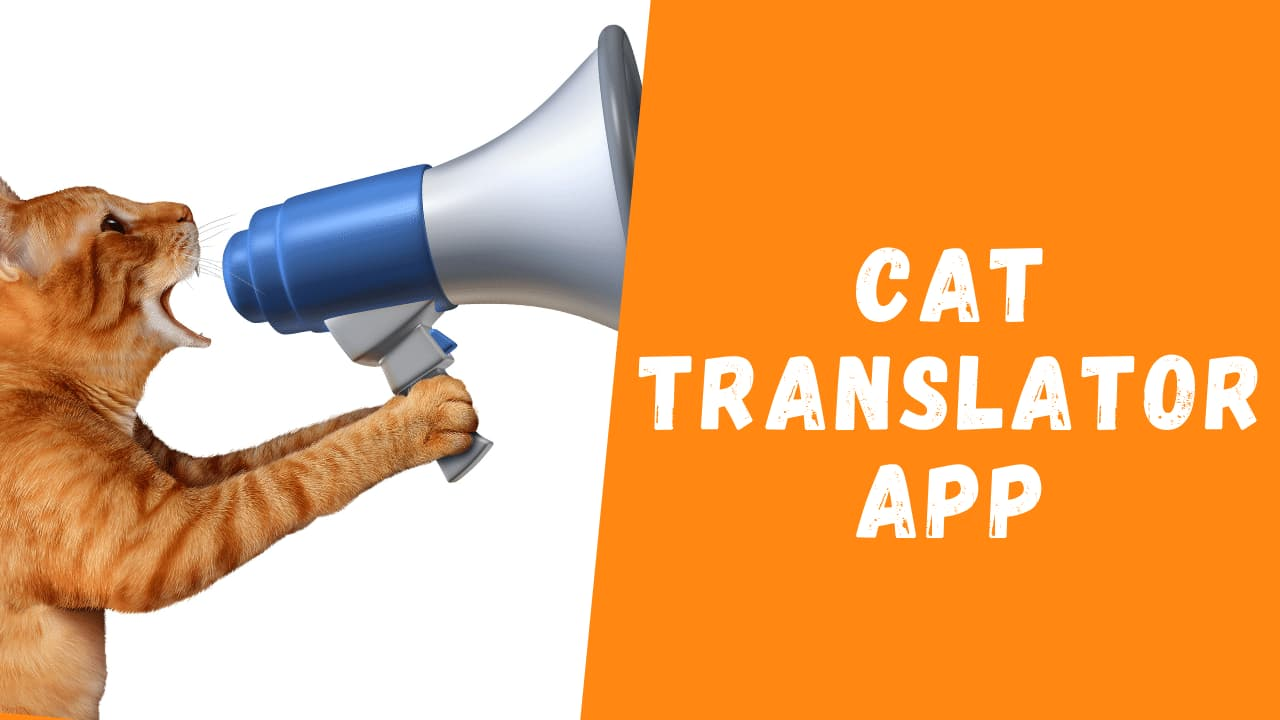 Cat Translator App